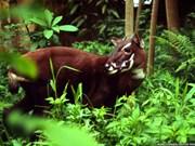 Thua Thien-Hue améliore la protection des animaux dans ses réserves naturelles