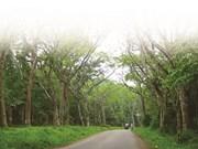 Parc national de Cuc Phuong, la réserve naturelle la plus importante du Vietnam