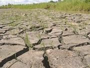 Le projet NAMA contribue à adapter au changement climatique