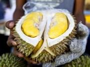 Le durian, produit à l'export potentiel de la Malaisie