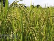 Les opportunités et défis pour les exportations agricoles en 2019