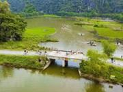Tam Coc : les rizières verdoyantes séduisent les touristes
