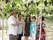 Ninh Thuan : le nombre de touristes multiplié par trois pendant les cinq jours fériés