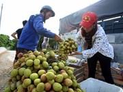 Exportation plus de 13.000 tonnes de litchis frais via la porte frontalière de Tan Thanh