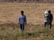 Thaïlande : des pluies artificielles pour lutter contre la sécheresse