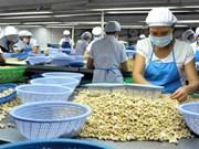 Montée en flèche des exportations nationales de noix de cajou vers la Chine