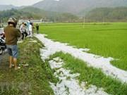 Déluge de grêlons dans les rizières et jardins de Dien Bien