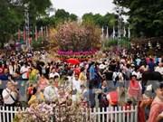 La fête des fleurs de cerisier Japon - Hanoï 2019 se prolonge
