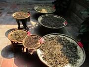 La médecine traditionnelle à l'honneur dans un musée à Hôi An