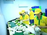 Vina T&T exporte 71 tonnes de mangues aux États-Unis