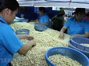 Aides néerlandaises pour développer la marque de noix de cajou de Binh Phuoc