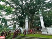 Le banian patrimonial du temple Tan Viên Son Thanh
