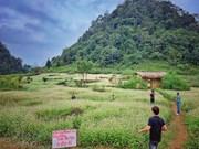 Champs de fleurs de sarrasin: un site incontournable pour prendre de photos à Ha Giang