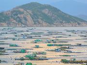Ile de Binh Ba, capitale de l'élevage de homard en baie de Cam Ranh