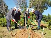 Plantation de 125 cerisiers japonais à Da Lat
