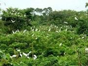 Le jardin des oiseaux de Ca Mau