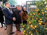 Le village de kumquat de Tu Liên se prépare pour l'année du Cochon