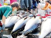 De bons résultats des exportations de thon en 2018