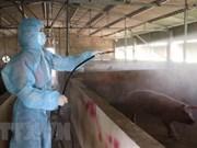 Le Vietnam est capable de produire les vaccins contre la peste porcine africaine