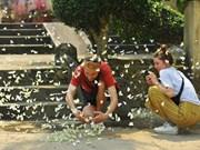 Des essaims de papillons au Parc national de Cuc Phuong