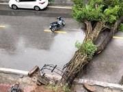 Tempête Wipha : un mort et 15  disparus