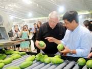 Les fruits locaux s'efforcent de reconquérir le marché national