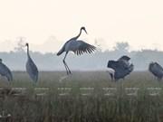 La nature sous les yeux du photographe Bay Lam