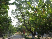 Des plantes vertes couvrent l'archipel de Truong Sa
