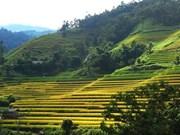 Découvrir les champs en terrasses de Hoang Su Phi sous forme virtuelle