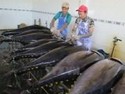 Croissance impressionnante des exportations nationales de thon vers l'Italie