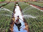 Attraction de l'investissement dans l'agriculture : une force pour le développement