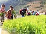 Dialogue sur les politiques liées au travail des enfants à Hanoi