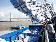 Opportunités d'exportations de riz vers l'Egypte