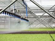Ba Ria-Vung Tau développe l'agriculture high-tech