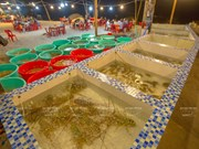 Ile de Binh Ba, capitale de l'élevage de homard sur la baie de Cam Ranh