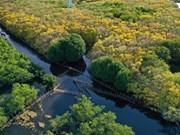 Exploration de la mangrove Ru Cha en automne