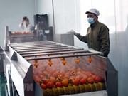 Mise en service d'une usine de production de kakis séchés à Lâm Dông