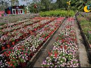De magnifiques champs des fleurs au bord de la rivière Saigon