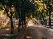 """Phan Dinh Phung, """"rue des feuilles dorées"""" les plus connues à Hanoï"""