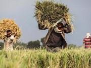 La CE envisage d'imposer les importations de riz du Cambodge et du Myanmar