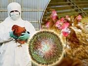 Le Cambodge signale le premier foyer de grippe aviaire H5N6