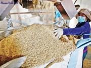 Le Cambodge voit ses exportations de riz diminuer ces 11 derniers mois