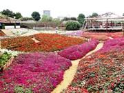 Le parc floral de Hô Tây, une destination prisée à Hanoï