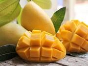 Les exportations de mangues  vietnamiennes en croissance rapide