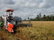 De nombreux contrats d'exportation de riz ont été signés