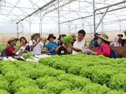 Lam Dong améliore sa gestion de la sécurité sanitaire des aliments