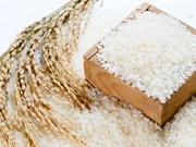 Hanoï exportera du riz Japonica