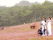Da Lat: Festival des herbes roses au pied de la montagne de Lang Biang