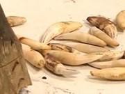 Le trafic d'animaux sauvages et de plantes doit être plus sévèrement puni