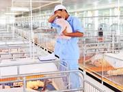 Élevage: le marché vietnamien, un eldorado pour les entreprises étrangères